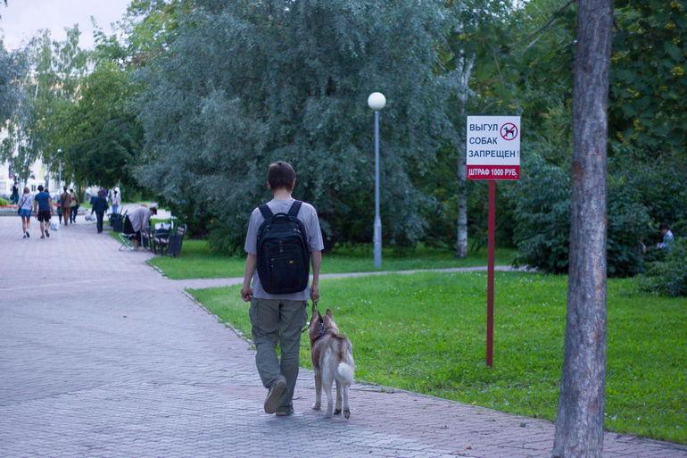 Ответственность за выгул животных без намордника