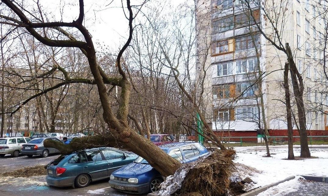 Незаконная вырубка дерева в городе