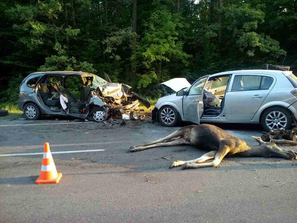 Штраф за лося сбитого машиной