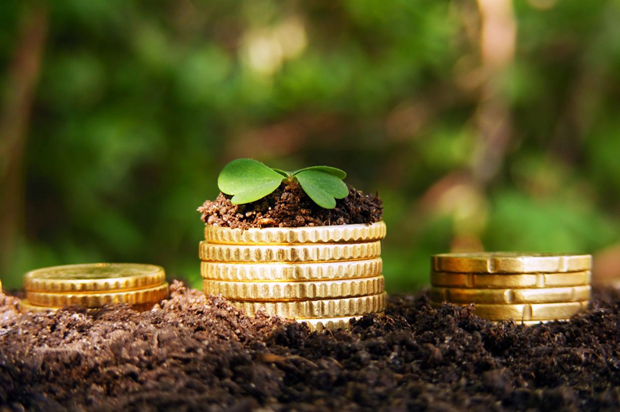 Ставки и установление земельного налога