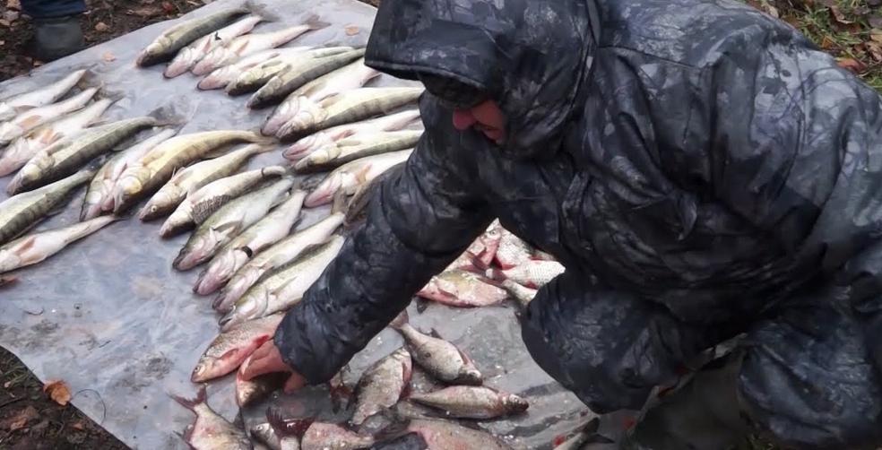 Подсчет причиненного ущерба за незаконный вылов рыбы